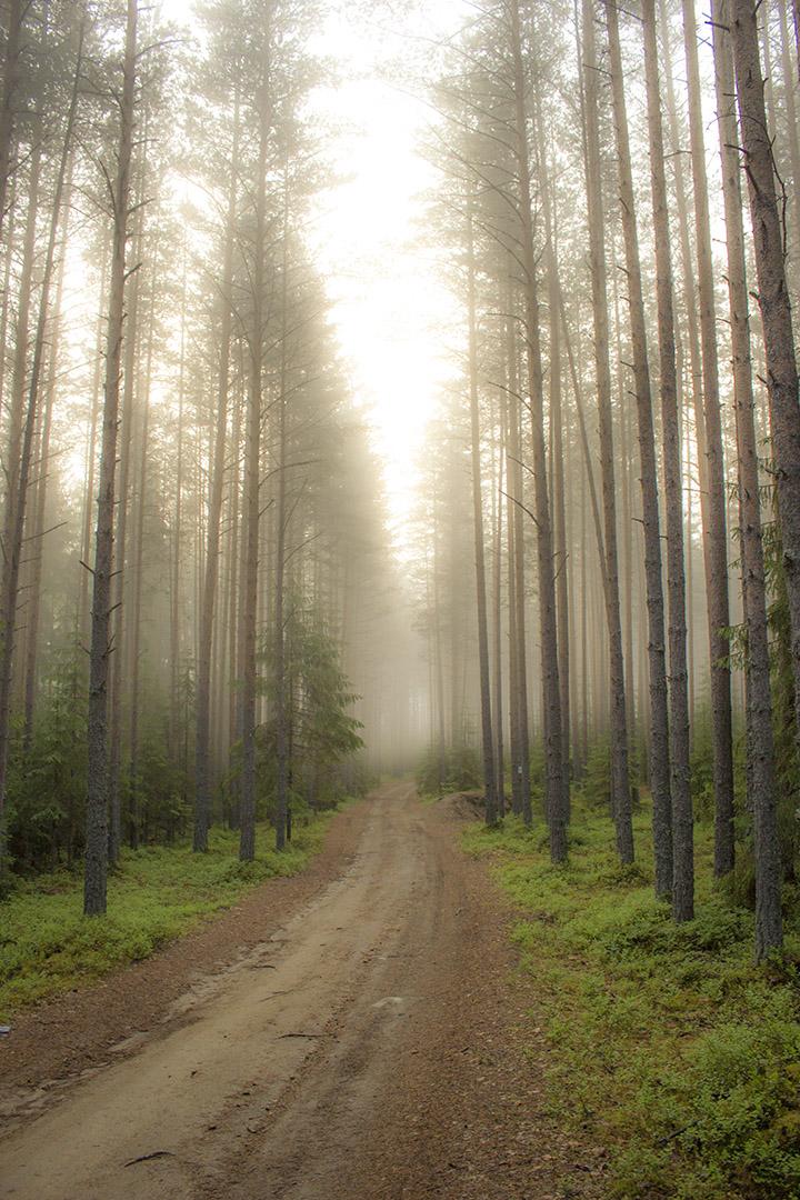 Туман в лесу. Жара